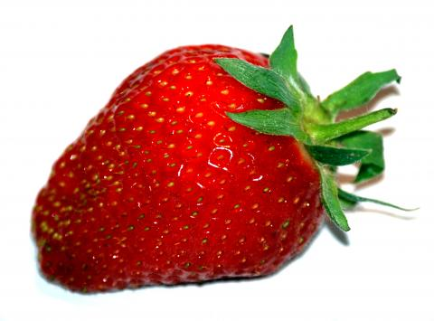Prodám jahody