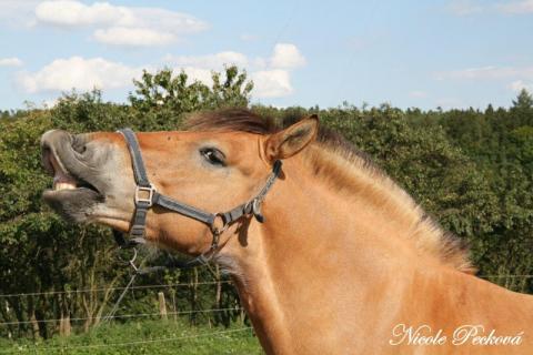 Práce u koní v anglii